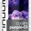 continuum_coralline_purplecx_99xpktQZGFWn_large